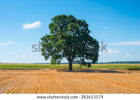harvested field and one big tree - stock photo