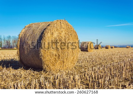 Harvested field with hay bales - stock photo