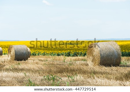 Harvested field with straw bales in the sun - stock photo