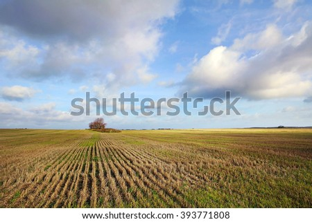 Harvested grain field.  Autumn harvest status of agricultural crops. Seed fields. Rural landscape. Landscape planting on the field. A wide cut wheat field to the horizon. Agriculture and farming. - stock photo