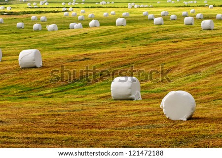 harvested grass field with wrapped bales - stock photo