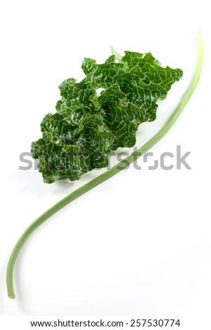 harvested in the Garden - stock photo