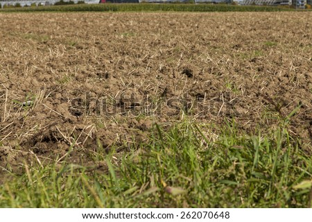 Harvested potato field with rotovated or ploughed earth and the odd remaining potato with green crops visible in the distance in an agricultural landscape - stock photo