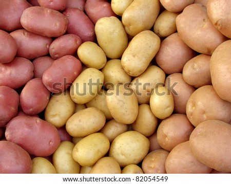 harvested potato tubers different varieties - stock photo