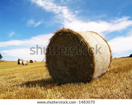 Harvested Rolls of Straw