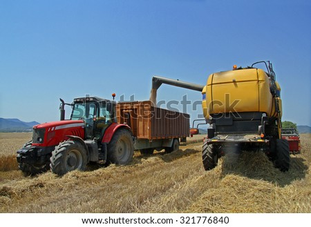 harvested wheat a summer d - stock photo