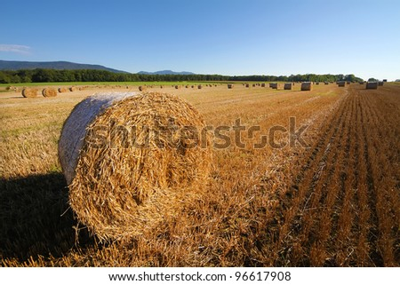 Harvested wheat field. Large bales of straw in the foreground. Clear skies - stock photo