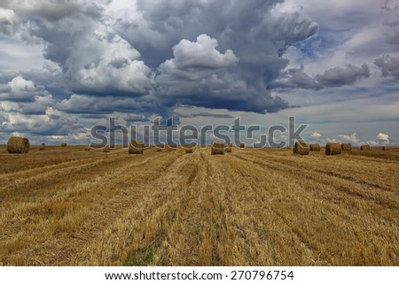 Harvested wheat field with hay rolls on the background of a stormy sky. - stock photo
