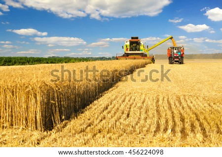 Harvester combine harvesting wheat and pouring it into tractor trailer during wheat harvest on sunny summer day.