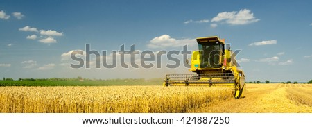 Harvester combine harvesting wheat on sunny summer day.