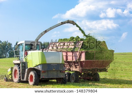 Harvester cutting field, loading Silage into a Tractor Trailer - stock photo