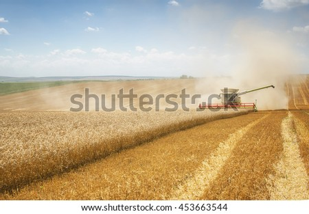 Harvester machine to harvest wheat field working. Combine harvester agriculture machine harvesting golden ripe wheat field. Agriculture - stock photo