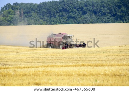 Harvester machine working to harvest wheat field . Combine harvester agriculture machine harvesting golden ripe wheat field. Agriculture concept.
