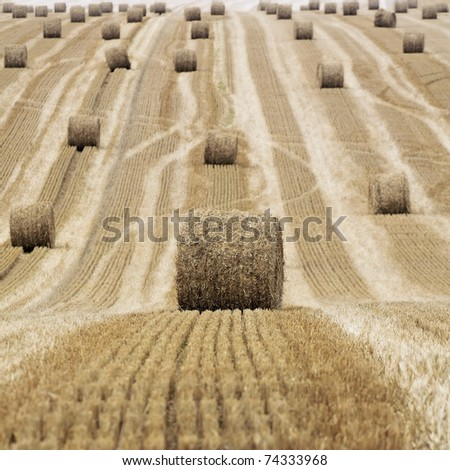 Harvestest straw bales on field, Gamaches en Vexin, France - stock photo