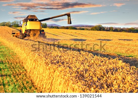 Harvesting combine cropping cereal field lit by autumn sun - stock photo