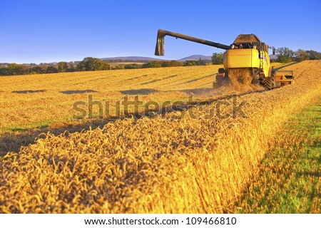 Harvesting combine in the field cropping cereal field - stock photo