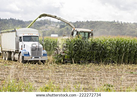 Harvesting corn for cattle feed - stock photo