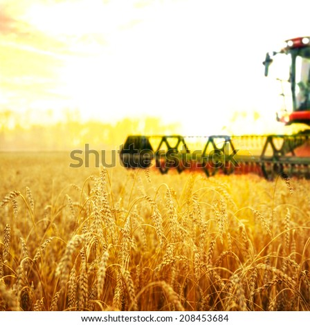 Harvesting machine on ripening ears of yellow wheat field on the sunset cloudy orange sky background of the setting sun on horizon - stock photo