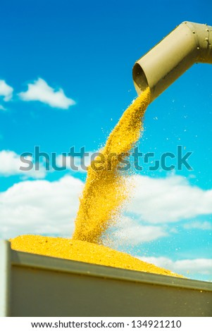 harvesting of wheat - stock photo