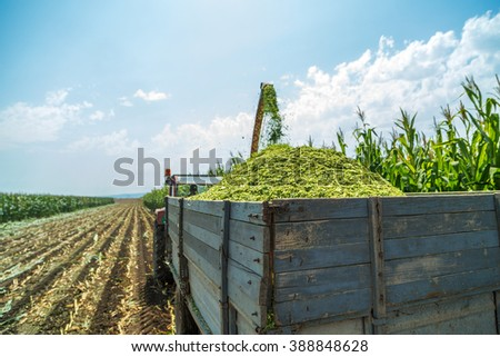 Harvesting silage corn maize - stock photo