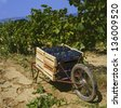 Harvesting the wine grapes at a vineyard in the Provence,France - stock photo