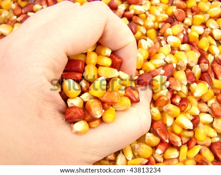 Harvests - stock photo