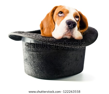 Hat of the wizard with a dog isolated on white background - stock photo