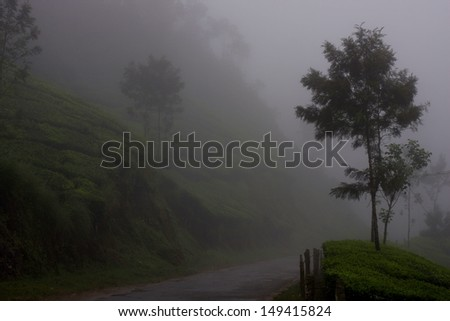 Haunted forest - stock photo