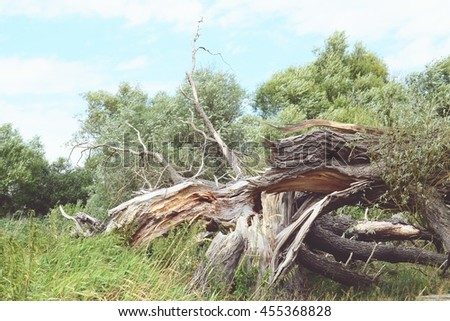 Havel river landscape at summer time (Havelland, Germany). dead willow tree. Vintage retouch of image