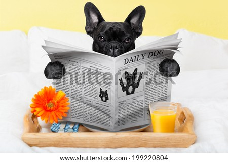 having breakfast in bed and reading the morning news - stock photo
