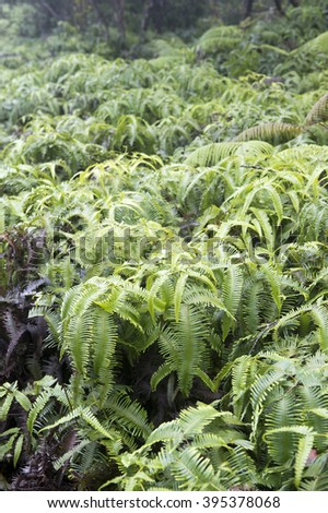 Hawaian Boston fern-2 - stock photo
