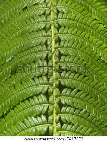 hawaii jungle fern close up - stock photo
