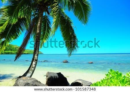 Hawaiian beach paradise palm tree - stock photo