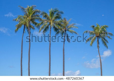 Hawaiian Coconut Palm Trees with the moon upper right and a blue sky backdrop.