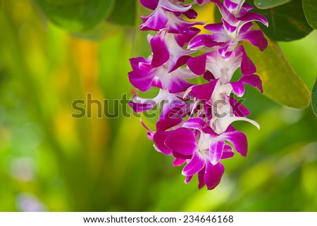 Hawaiian lei made of large beautiful orchid blooms - stock photo