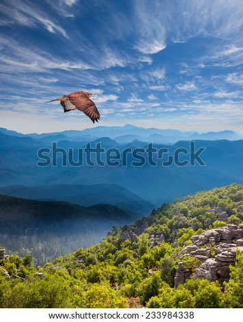 Hawk flying over the mountains - stock photo