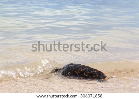 Hawksbill sea turtle on the beach - stock photo