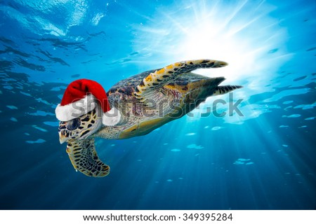 hawksbill sea turtle with santa hat in the ocean - stock photo