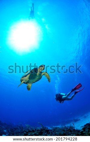Hawksbill Turtle with Sunburst and Diver, Grand Cayman - stock photo