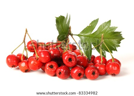 Hawthorn on white background