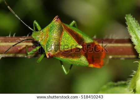 European stink bug stock images royalty free images for Little fairy door shark tank