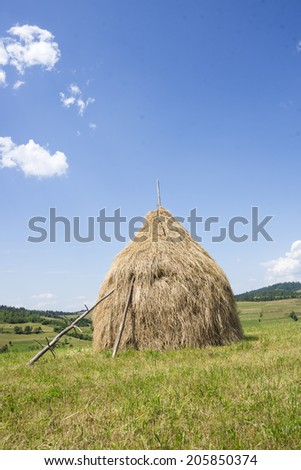 Hay - stock photo