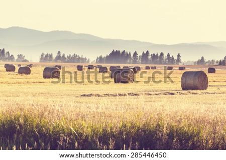 Hay - stock photo