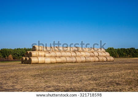 hay and straw bales in the end of summer; Straw bales on farmland with blue cloudy sky; Beautiful landscape with straw bales in end of summer - stock photo