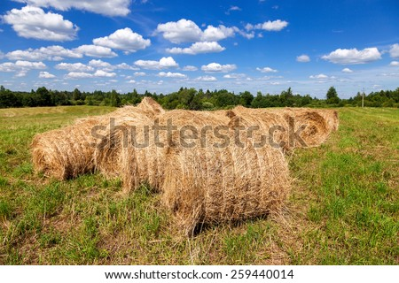 Hay and straw bales on farmland under blue sky in summer day - stock photo