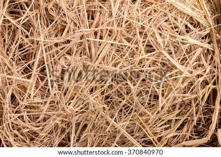 Hay background as a front view of a bale of hay as an agriculture farm and farming symbol of harvest time with dried grass straw - stock photo