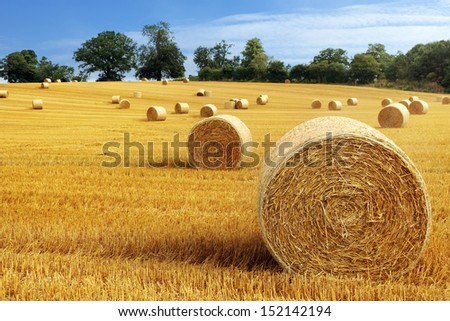 Hay bail harvesting in golden field landscape - stock photo