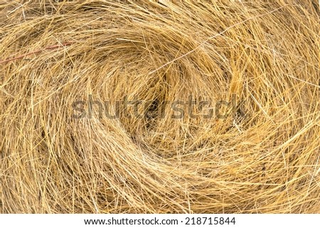 Hay bails on the field under blue sky - stock photo