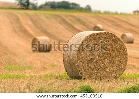 hay bale in harvest field