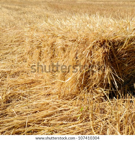 Hay bale in the field - stock photo